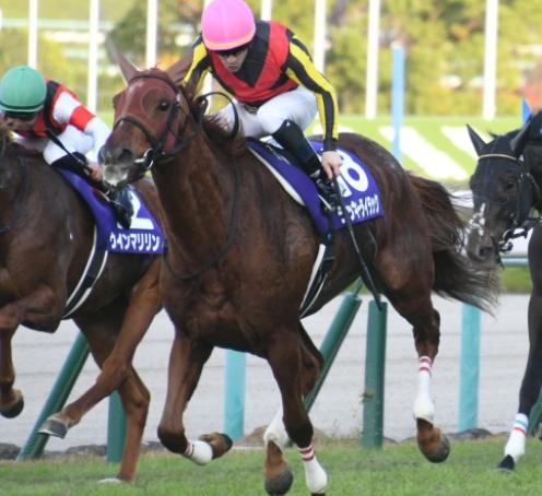 エリザベス女王杯の2020年出走予定馬とコース・過去レースを勉強しよう